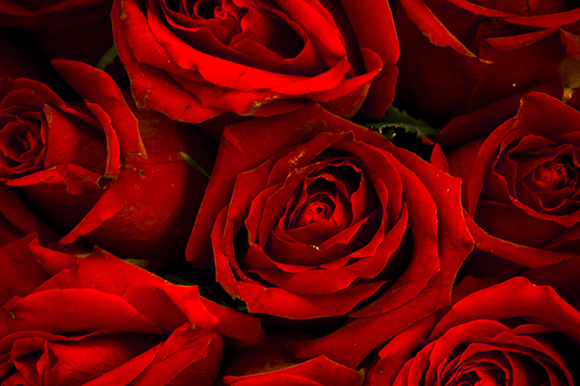 Roses Image Pack