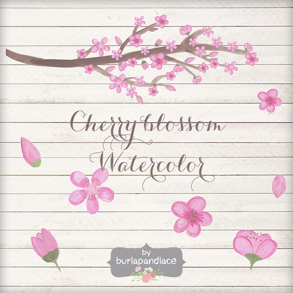 Hand Painted Cherry Blossom Clipart