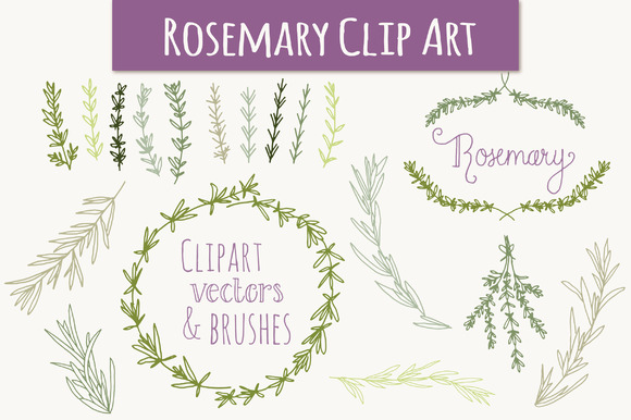 Rosemary Clip Art Vectors