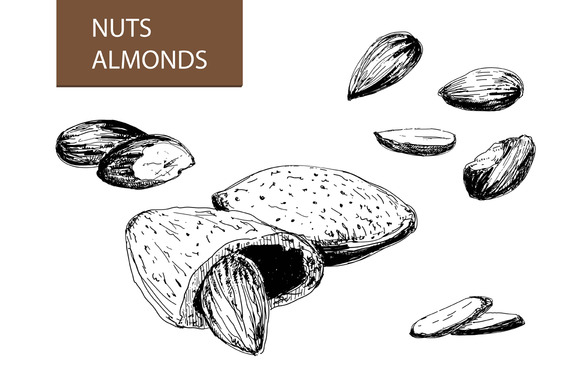 Nuts Almonds Set Of Illustrations