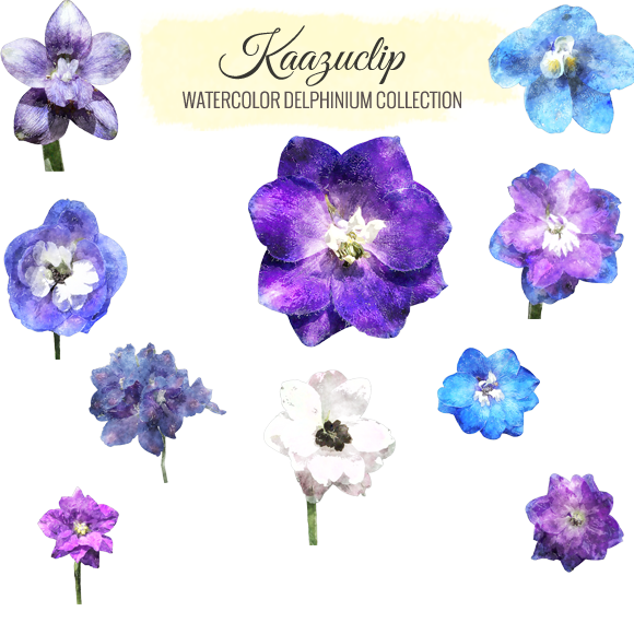 Watercolor Delphinium Collection