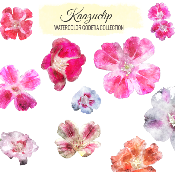 Watercolor Godetia Collection