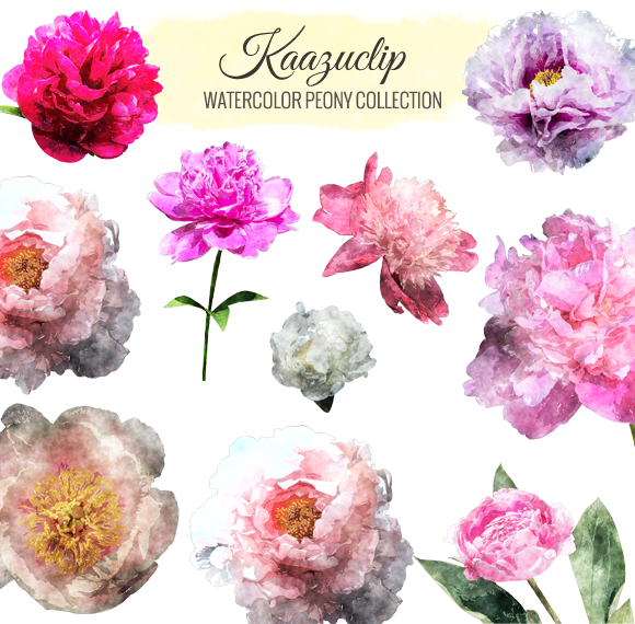 Watercolor Peony Collection