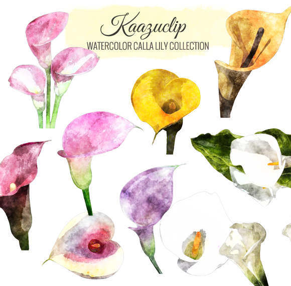 Watercolor Calla Lily