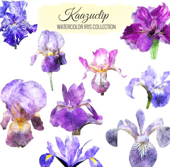 Watercolor Iris Collection