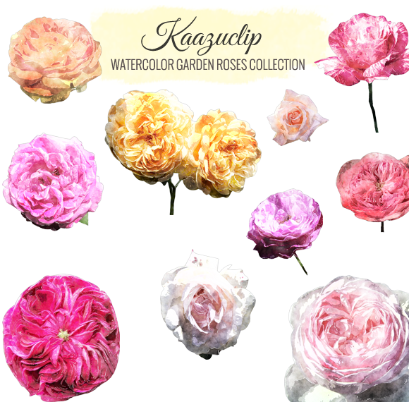Watercolor Garden Roses Collection