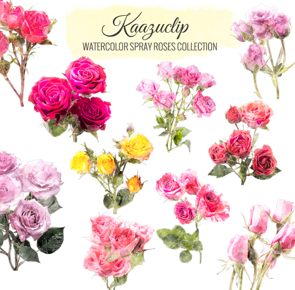 Watercolor Spray Roses Collection