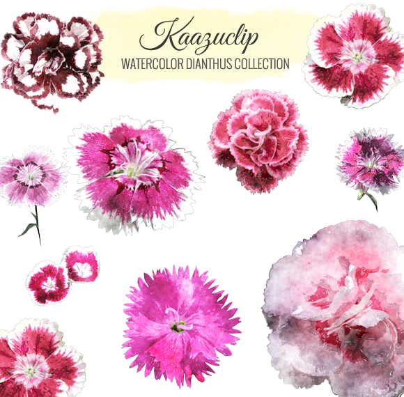 Watercolor Dianthus Collection