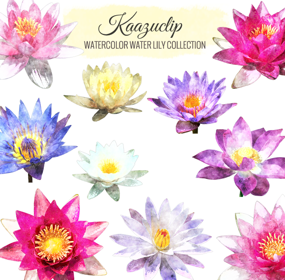 Watercolor Water Lily Collection