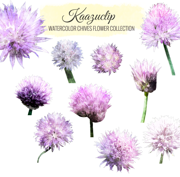 Watercolor Chives Collection