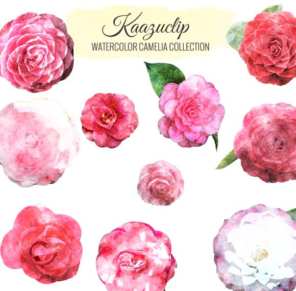 Watercolor Camelia Collection