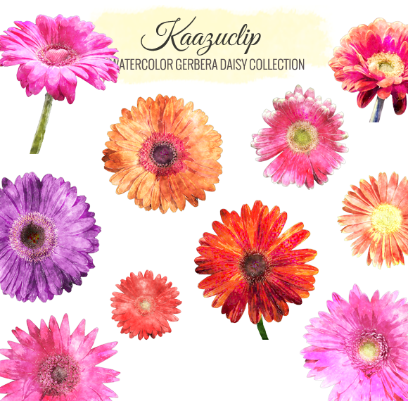 Watercolor Gerbera Dasiy Collection