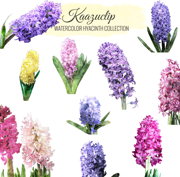 Watercolor Hyacinth Collection