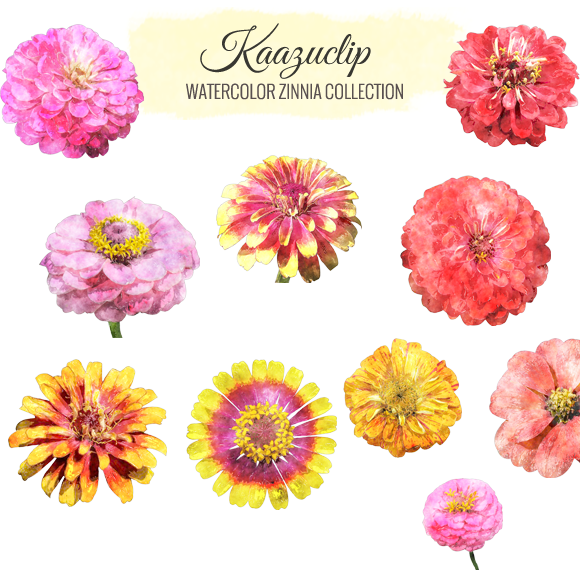 Watercolor Zinnia Collection