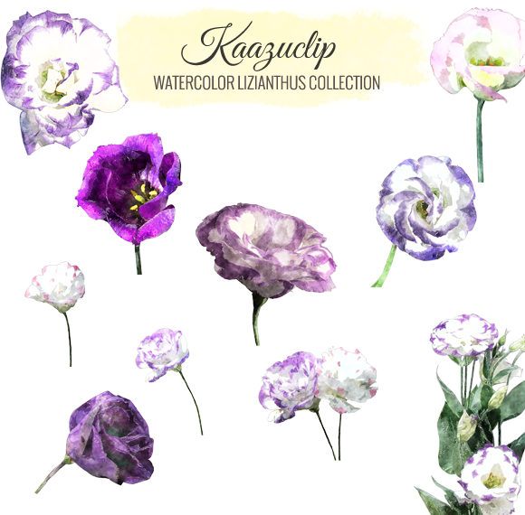 Watercolor Lizianthus Collection