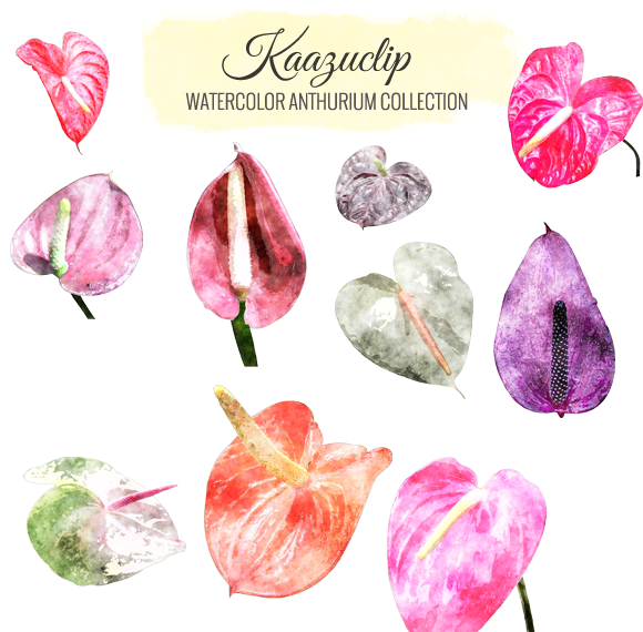 Watercolor Anthurium Collection