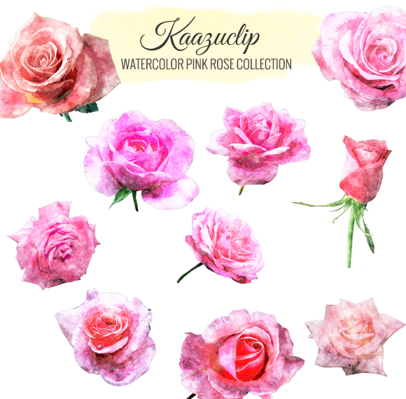 Watercolor Pink Rose Collection
