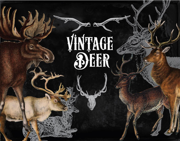 31 Vintage Deer Clipart Brushes