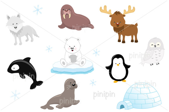 Arctic Animal Set