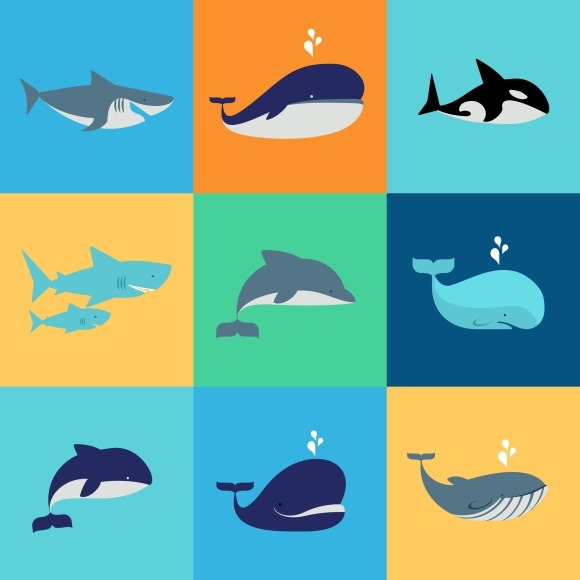 Vector Set Of Whale Dolphin Sharks