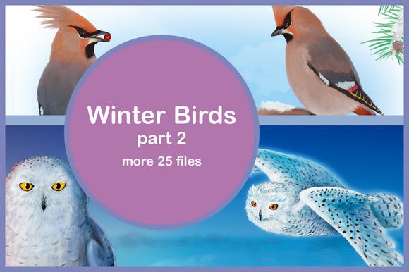 Winter Birds Part 2