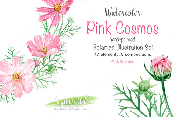 Watercolor Set Pink Cosmos Flowers