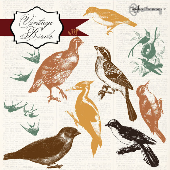 Vintage Birds Clipart Photoshop