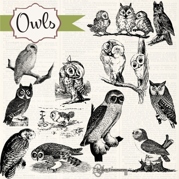 Vintage Owls Clipart Brushes