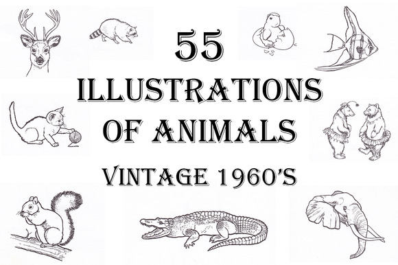 Vintage 1960s Illustrations- Animals