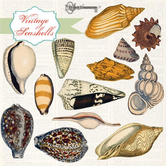 Vintage Sea Shell Illustrations