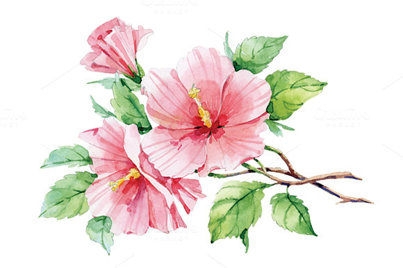 Watercolor Pink Hibiscus