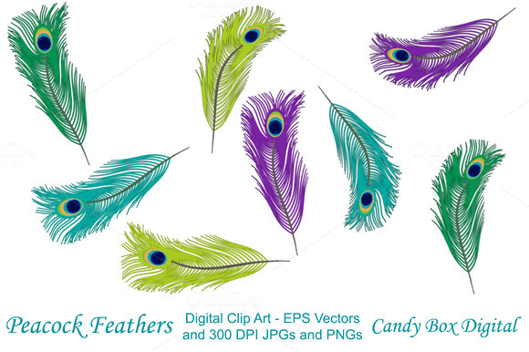 Peacock Feather Clip Art W Vectors
