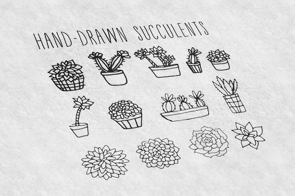 28 Hand-Drawn Succulents