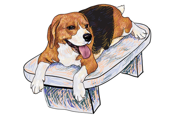 Beagle On Chair