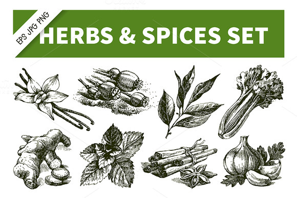 Hand Drawn Sketch Herbs Spices Set