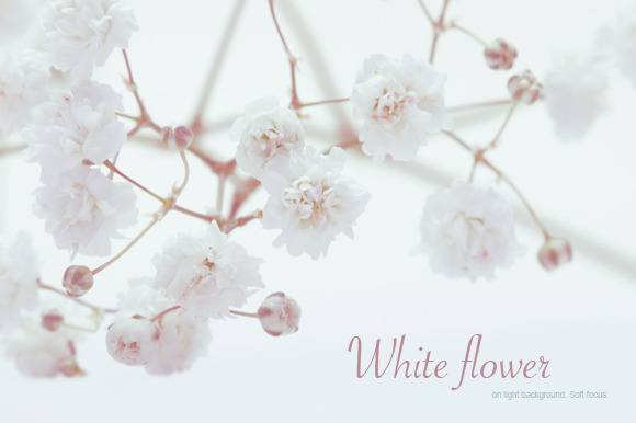 White Flower On Light Background