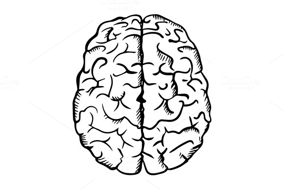 Human Brain Sketch In Outline Style