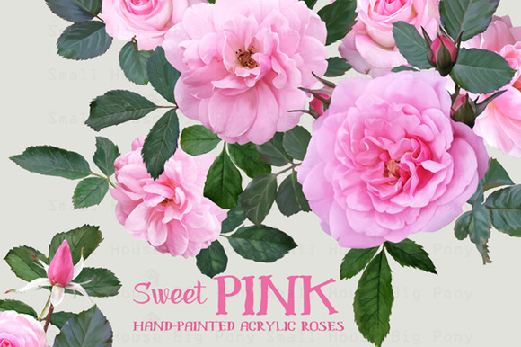 Sweet Pink Roses- Watercolor Floral