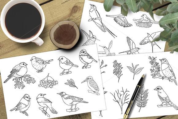 Sketch Birds Vector Set
