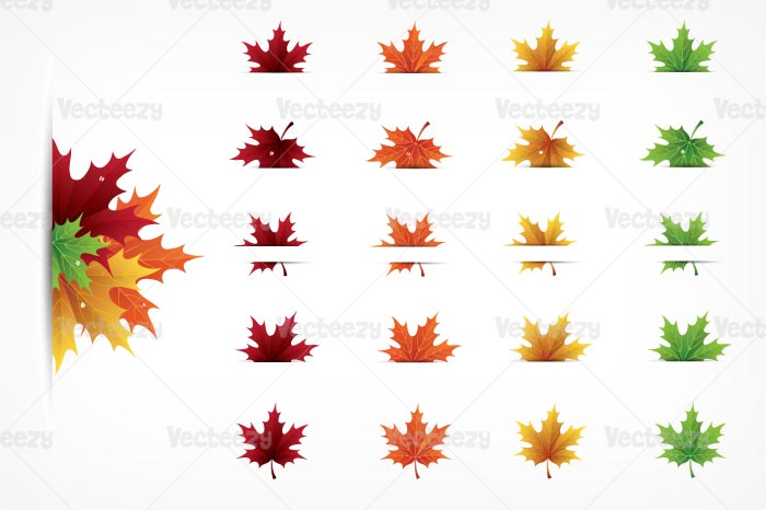 Autumn Maple Leaves Vector Pack Illustrations On