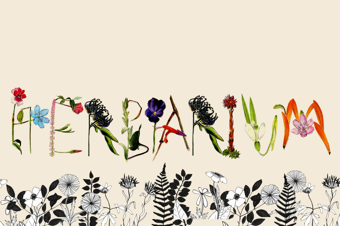 Herbarium Display Fonts On Creative Market