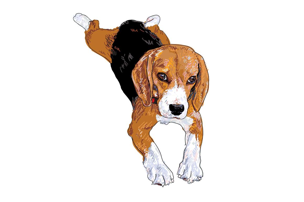 Funny Beagle | Car Interior Design