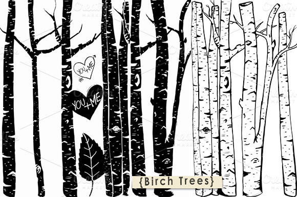 Birch tree clipart photoshop brush illustrations on