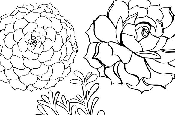 succulent outlines