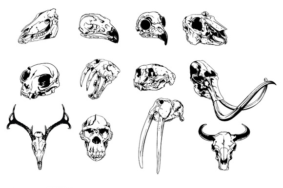 Zoology Vector Pack