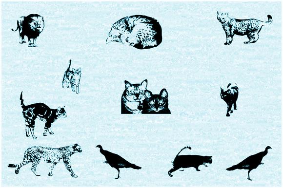 Cat E Poultry