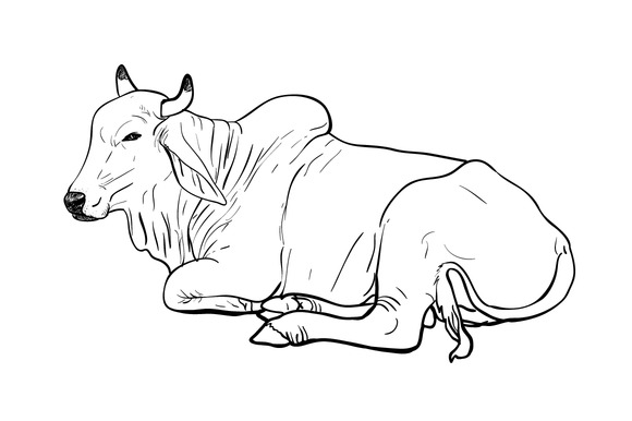 Line Art Cow : Cow line drawing