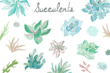 Watercolor Succulents Flower Pots Illustrations On