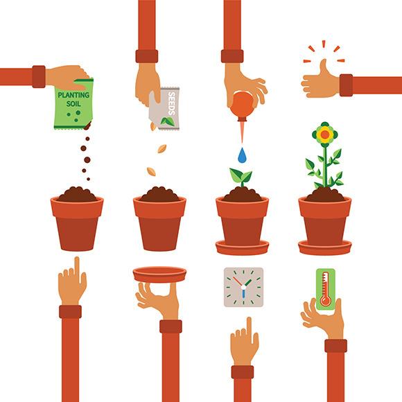 Planting Process Timeline