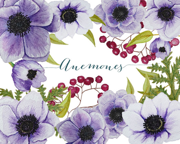 Purple Watercolor Anemones